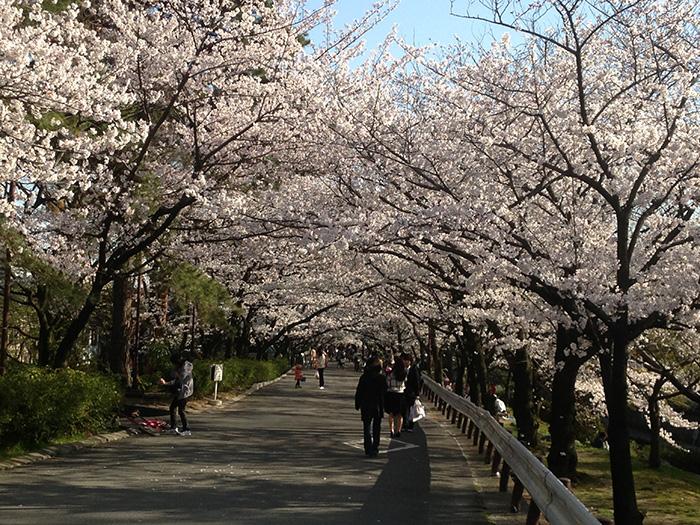 西宮市の桜の名所「夙川」です.jpg