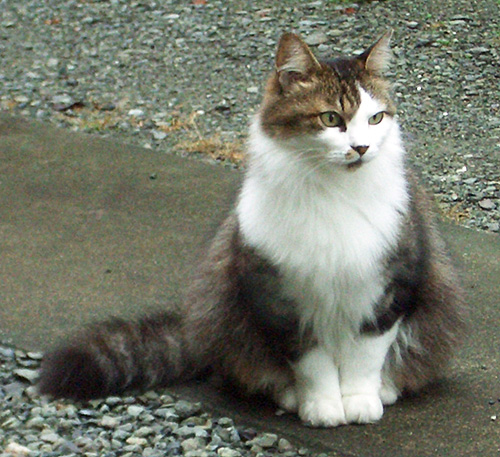 猫のちい.jpg